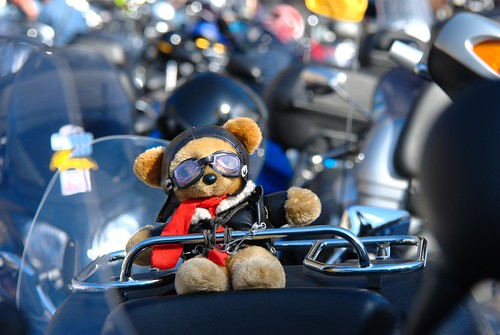 Bear on a Bike by RV Bob