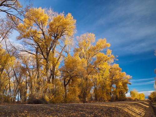 road autumn trees landscape gravel