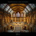 Natural History Museum - London, United Kingdom (HDR) by farbspiel