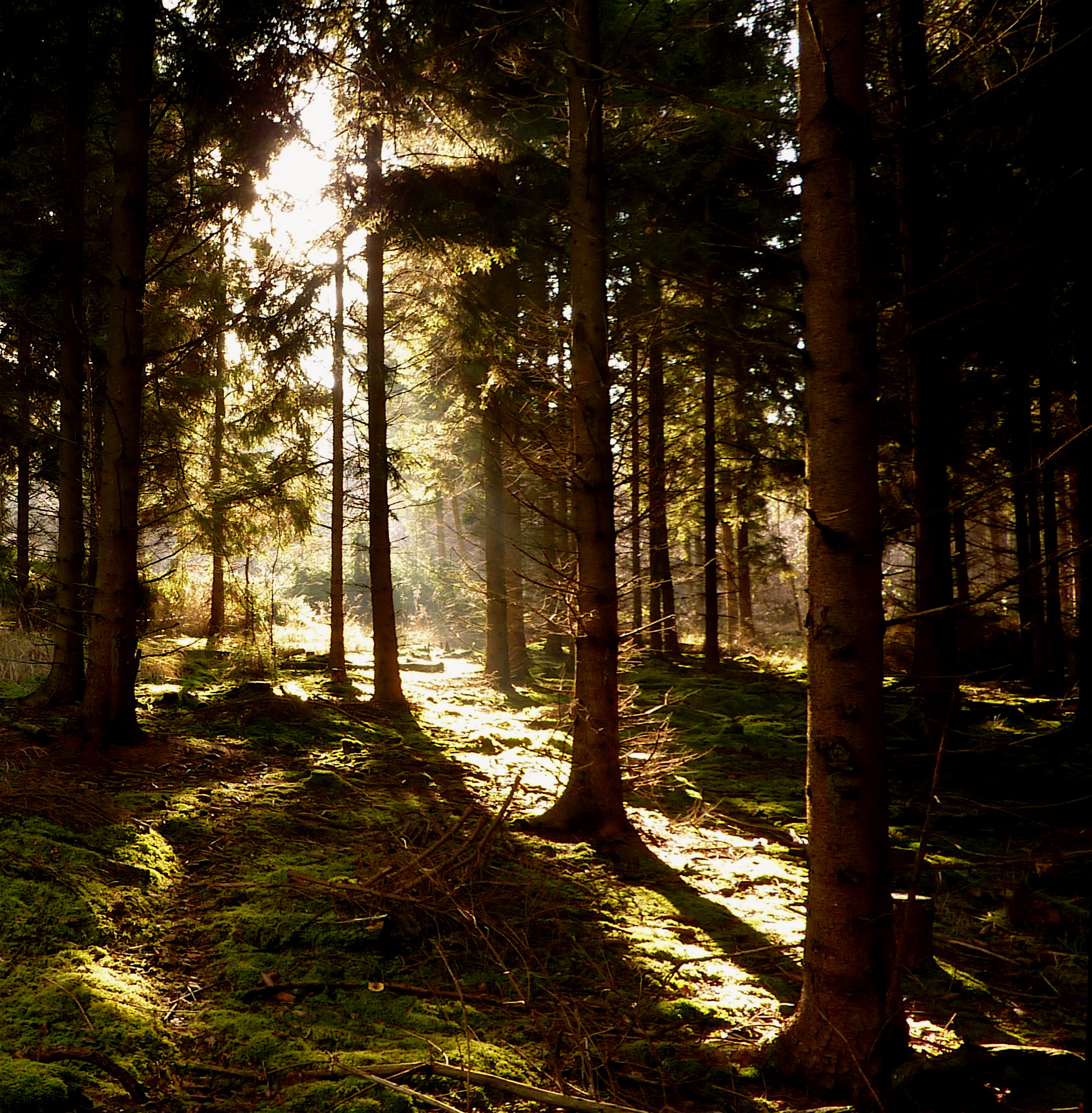 Magical light in the dark forest | Flickr - Photo Sharing!