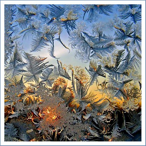 latvia latvian naturesfinest iceflowers supershot marikate mywinners anawesomeshot leduspuķes flickrdiamond leduspuķe