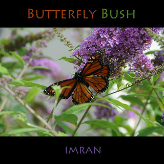 Butterfly. Bush. - IMRAN™ — 700+ Views!