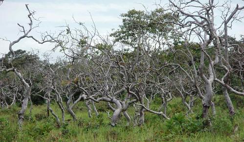 plants latinamerica forest landscapes panama centralamerica 2007 chiriqui centroamerica américalatina gpsapproximate chiriquí