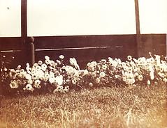 Garden in Bay Head, New Jersey - 1912