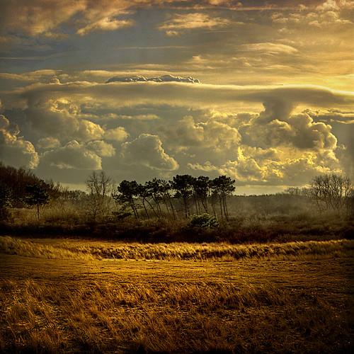 trees light sky grass clouds coast sand belgium belgique belgie lumière dunes sable textures ciel arbres cote nuages hdr herbes lezoute bratanesque