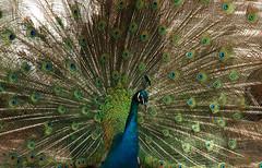 Uzbekistan April 2009