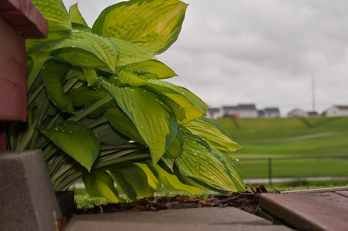 sky green clouds dof steps golfcourse waterdrops hostas nikon35mm nikond5000