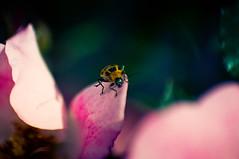 A Bugs Life: Yellow Ladybug