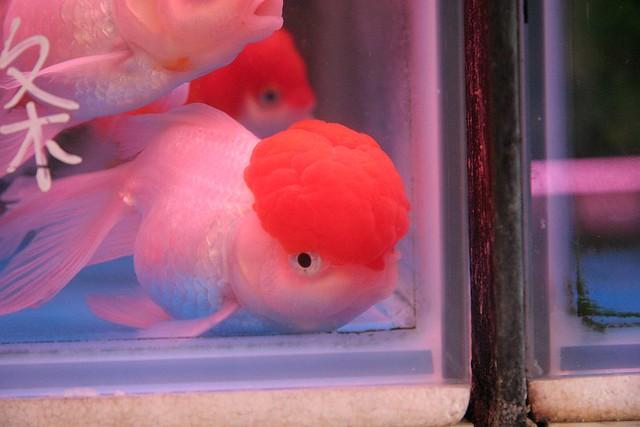 fish brain - photo #7