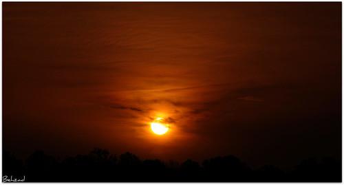 life red sky cloud tree sunrise alone sad iran live north nikond90 behzadno
