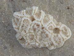 invertebrate(0.0), dish(0.0), fossil(1.0),