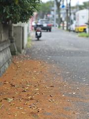 秋 Autumn 2010