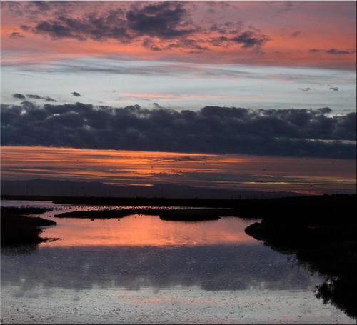 birds clouds sunrise reflections dawn bay san francisco peaceful estuary 100views palo alto baylands 7505 7506 vertorama