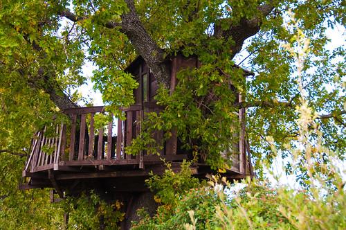 La casa sull'albero? Un sogno anche per adulti