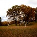 storm king_kenneth snelson_oct 10 by snotbubble