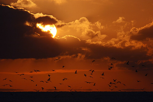 Sunset, Strumble Head and Gulls