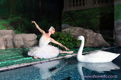 swan_lake_3