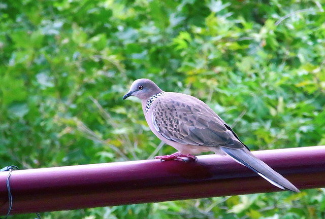 Bird on the Balcony