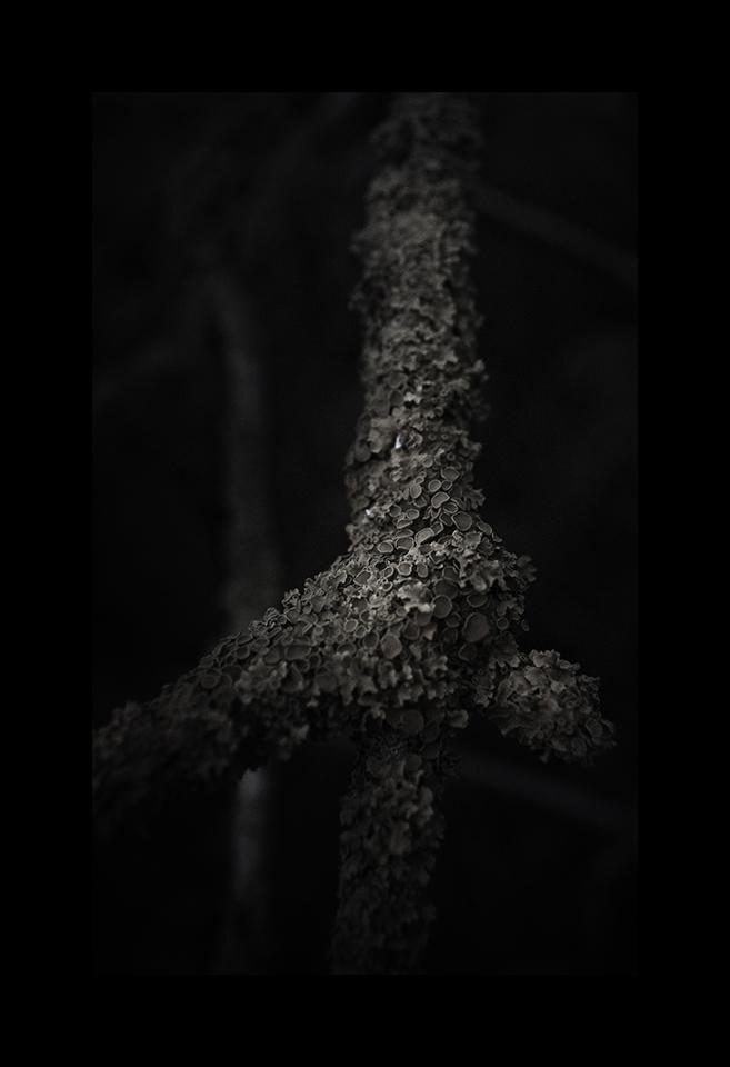 Xanthoria Parietina by Nicholas M Vivian