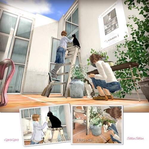 Cats :D - 無料写真検索fotoq