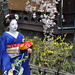 Small photo of A Geisha Promenading