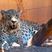 Small photo of Adelaide Zoo