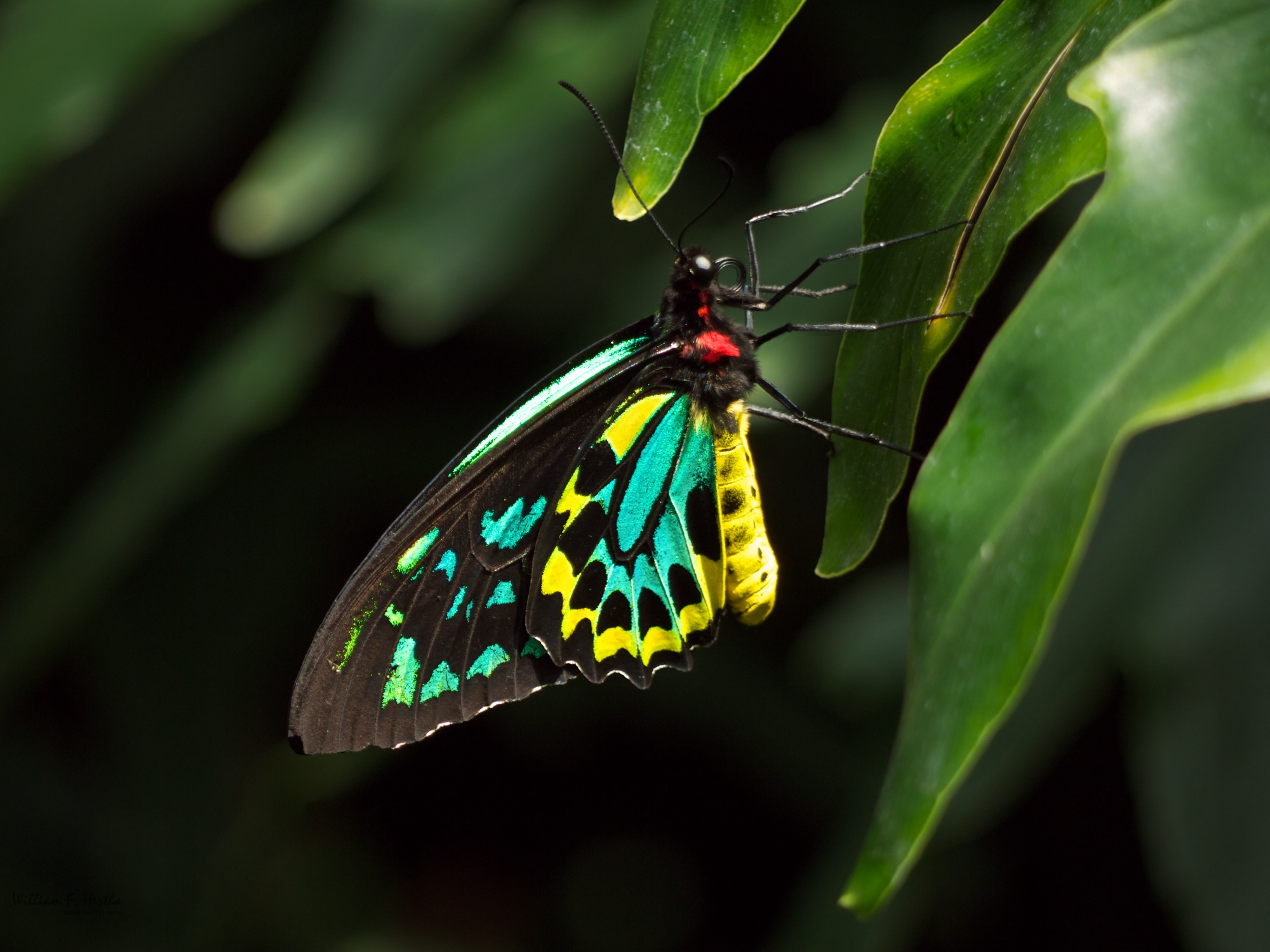 niagara falls butterfly conservatory flickr photo. Black Bedroom Furniture Sets. Home Design Ideas