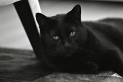 A black cat in black and white