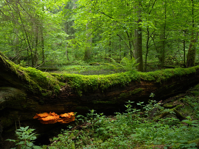 photo of Bialowieza Forest