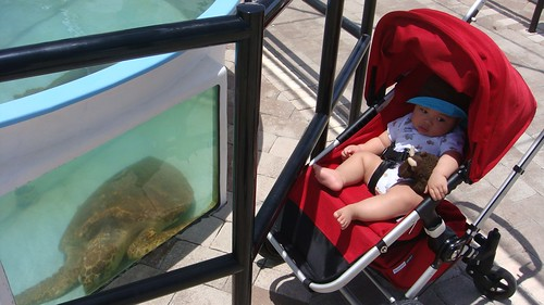 Buddy Bison and friend visiting sea turtles in recovery at the Marine Life Center in Loggerhead Beach State Park