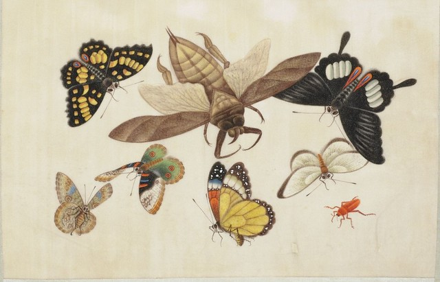 gorgeous 19th c. Chinese hand-painted butterfly album