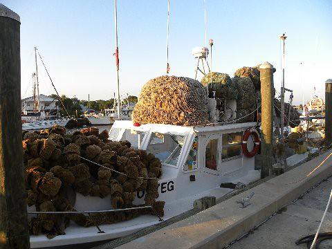 At the sponge docks - Tarpon Springs,Fl.