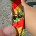 Rasta Diy Cat Safety Collar