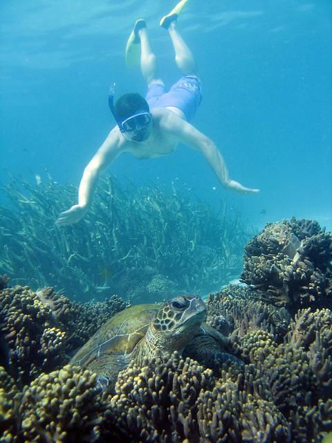 Ningaloo Reef Snorkel | Flickr - Photo Sharing!