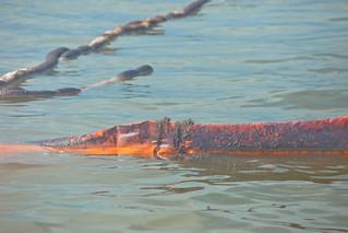 tedx-oil-spill-0093