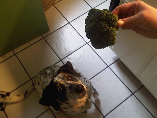 Wiggles. The Broccoli Dog.