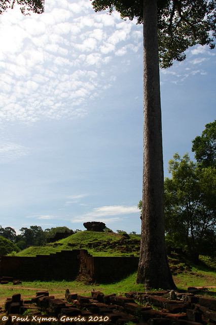 Tall Tree, the Royal Palace, Angkor Thom
