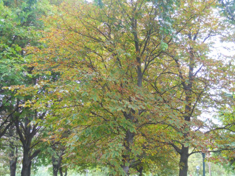 Árboles en otoño 10