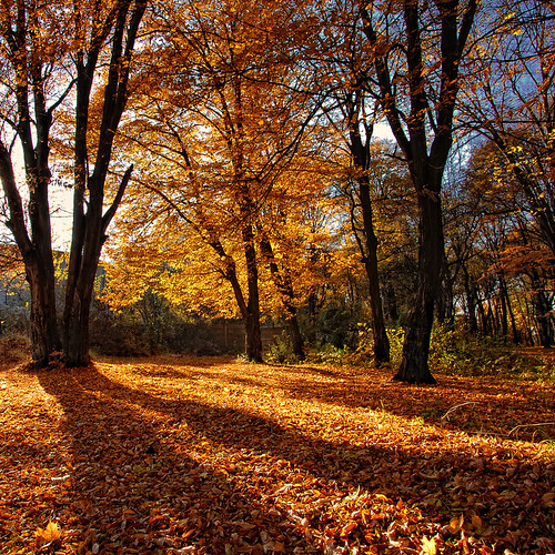 "travel autumn sunset color tree fall colors forest season landscape leaf shadows tourist romania concept visual hdr brasov magicalmoments paragon ourtime idream kartpostal ""nature fantasticnature mywinners alberoefoglia nikond40 flickraward vertorama spiritofphotography saariysqualitypictures qualitysurroundings redmatrix bestcapturesaoi oracope bestofmywinners sailsevenseas creativeoutbursts coppercloudsilvernsun goldsealings elitegalleryaoi outstandingromanianphotographers abokehoflight healinglightofthespirit"