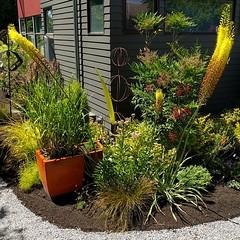 When #art imitates #plants ... #westseattlegardentour #westseattle #garden #gardenart #glassart #flowerpot #planter