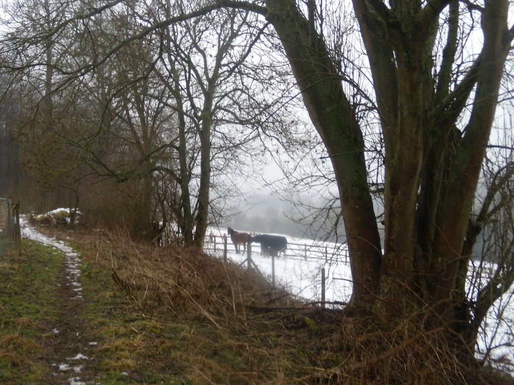Horses through hedgerow DSCN8616 Chorleywood to Chesham