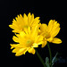 Yellow Flowers by Billy Wilson Photography