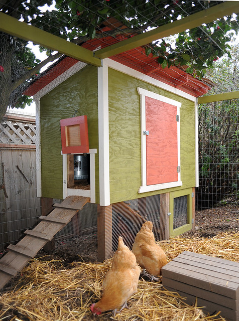 Our Chicken Coop