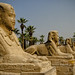 Avenue of the Sphinxes
