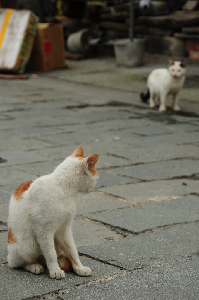 2010.02.28 @ 頭城老街