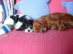 <p>Rocco and Roma put their heads together to solve the issue of World Peace but unfortunately fall asleep before coming up with a solution</p>