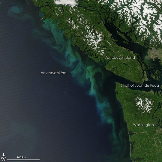 algal bloom off of Vancouver