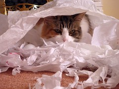 Shredded paper everywhere...
