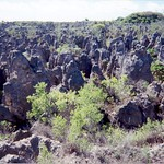 Karst Remains on Nauru Island