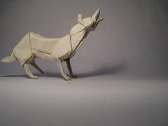 Wolf by José Herrera